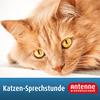 Katzen-Sprechstunde von Antenne Niedersachsen